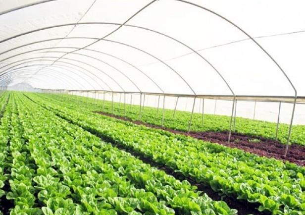 Nghị định 109/2018/NĐ-CP: Khuyến khích phát triển sản xuất hữu cơ