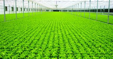 Công ty CP Nông nghiệp Hà Nội – GFS
