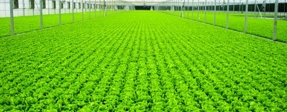 Công ty Cổ phần Nông nghiệp Hà Nội – GFS